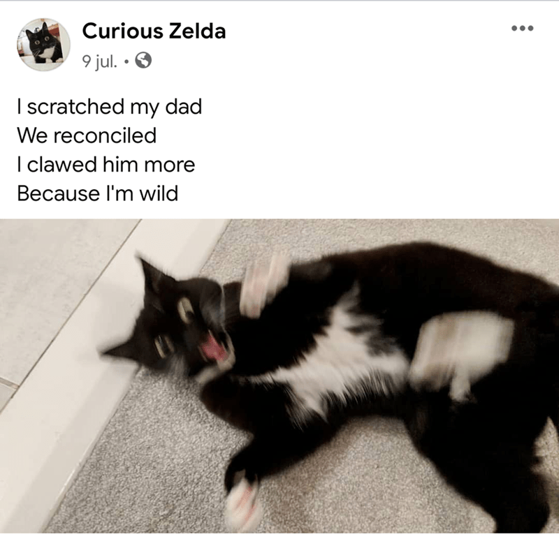 Cat - Curious Zelda 9 jul. • O I scratched my dad We reconciled I clawed him more Because l'm wild