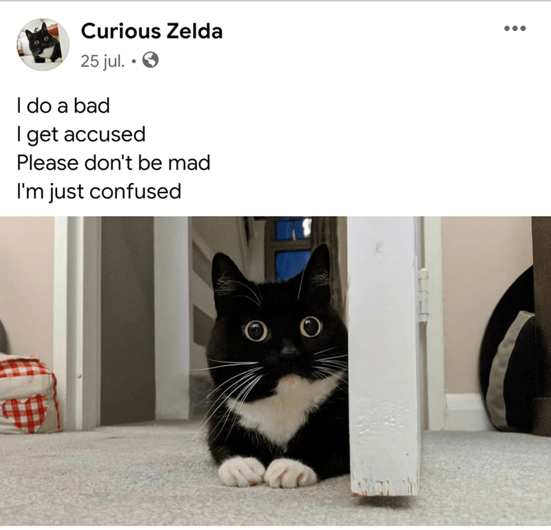 Cat - Curious Zelda 25 jul. • O I do a bad I get accused Please don't be mad I'm just confused