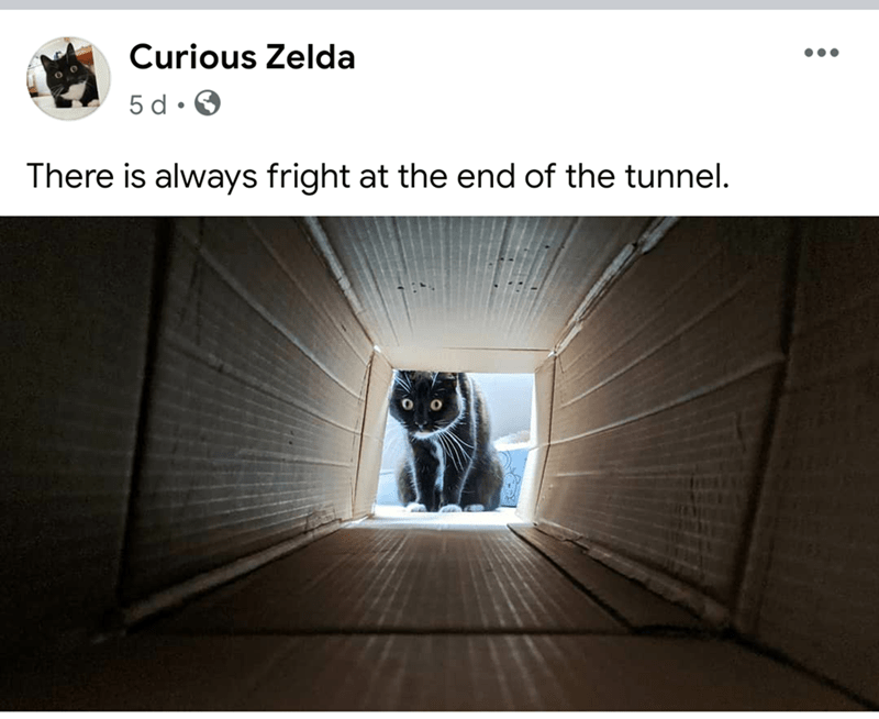 Text - Curious Zelda 5 d • There is always fright at the end of the tunnel.