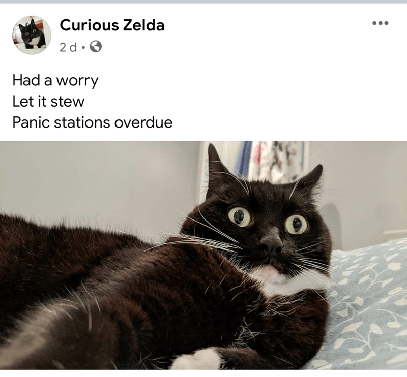 Cat - Curious Zelda 2 d • Had a worry Let it stew Panic stations overdue