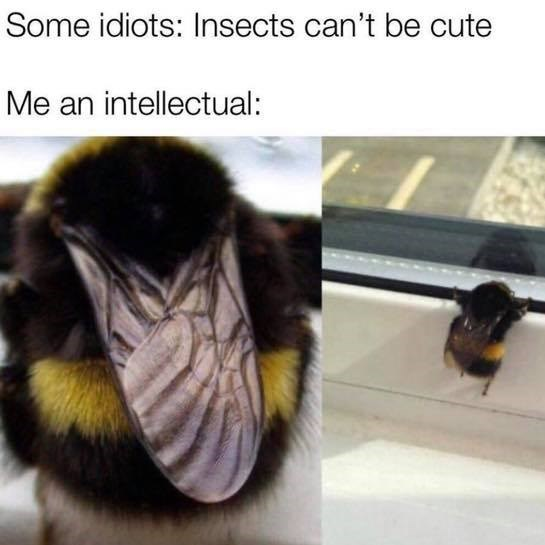 Some idiots: Insects can't be cute Me an intellectual: little bumble bee