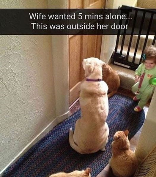 Dog - Wife wanted 5 mins alone... This was outside her door