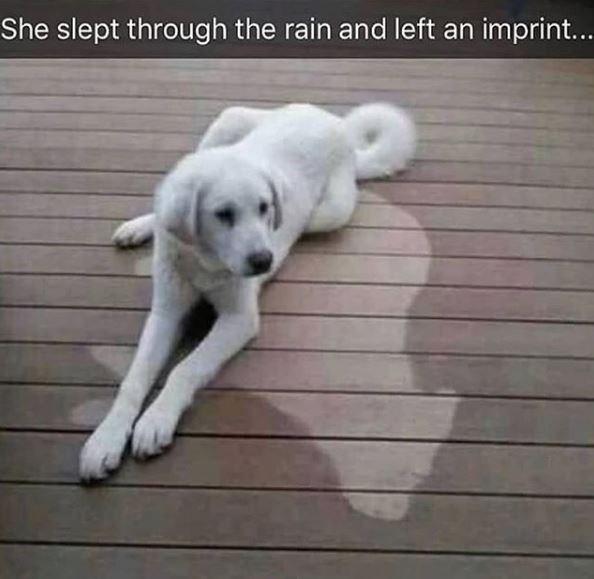 Mammal - She slept through the rain and left an imprint...