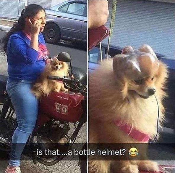 Dog - -is that..a bottle helmet?