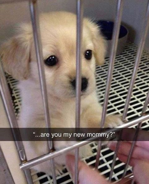 """Dog - """"...are you my new mommy?"""""""