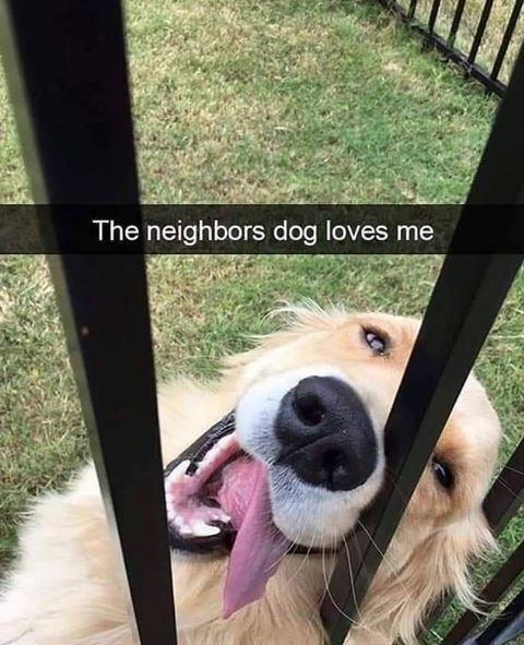 Dog - The neighbors dog loves me
