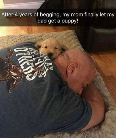Dog - After 4 years of begging, my mom finally let my dad get a puppy! OFRENS
