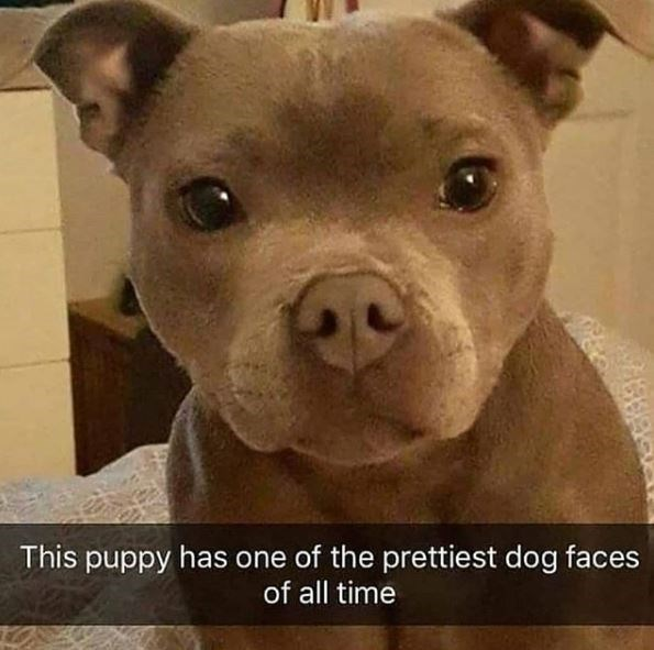 Dog breed - This puppy has one of the prettiest dog faces of all time