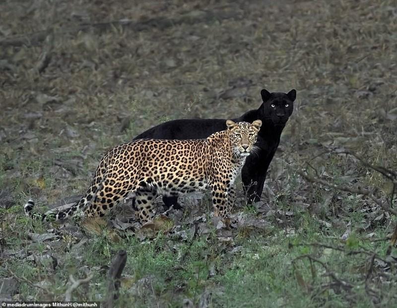 Terrestrial animal - © mediadrumimages/MithunH/@mithunh
