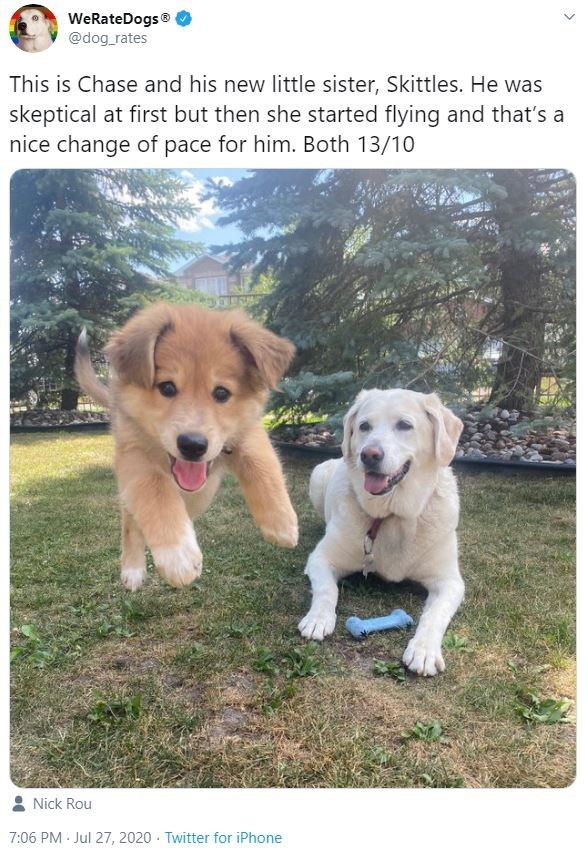 Dog - WeRateDogs® @dog_rates This is Chase and his new little sister, Skittles. He was skeptical at first but then she started flying and that's a nice change of pace for him. Both 13/10 Nick Rou 7:06 PM Jul 27, 2020 · Twitter for iPhone
