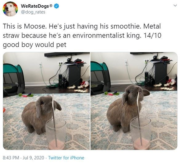 Dog breed - WeRateDogs® @dog_rates This is Moose. He's just having his smoothie. Metal straw because he's an environmentalist king. 14/10 good boy would pet 8:43 PM · Jul 9, 2020 - Twitter for iPhone