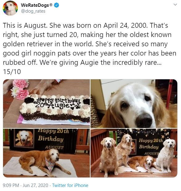 Dog - WeRateDogs® @dog_rates This is August. She was born on April 24, 2000. That's right, she just turned 20, making her the oldest known golden retriever in the world. She's received so many good girl noggin pats over the years her color has been rubbed off. We're giving Augie the incredibly rare.. 15/10 ePPY BirtheaY 20Augie Happy 20 th Birthday Happy 20 th Birthday AUGUST AUGUST 9:09 PM · Jun 27, 2020 - Twitter for iPhone >