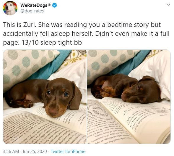 """Dog - WeRateDogs® @dog_rates This is Zuri. She was reading you a bedtime story but accidentally fell asleep herself. Didn't even make it a full page. 13/10 sleep tight bb oadd em gee d heroes and h , hdsno the """"evid odia e cot l elese. Yet h A A apad erally and 3:56 AM Jun 25, 2020 · Twitter for iPhone der of thing o newon for w e js defud as >"""