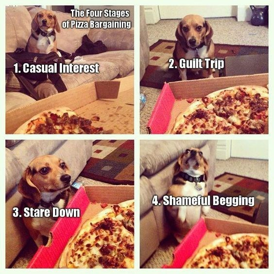Four stages of Pizza Bargaining 1. Casual Interest 3. stale Down 2. Guilt Trip 4. Shameful Begging cute dog begging for food