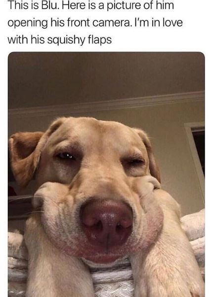 Dog - This is Blu. Here is a picture of him opening his front camera. I'm in love with his squishy flaps