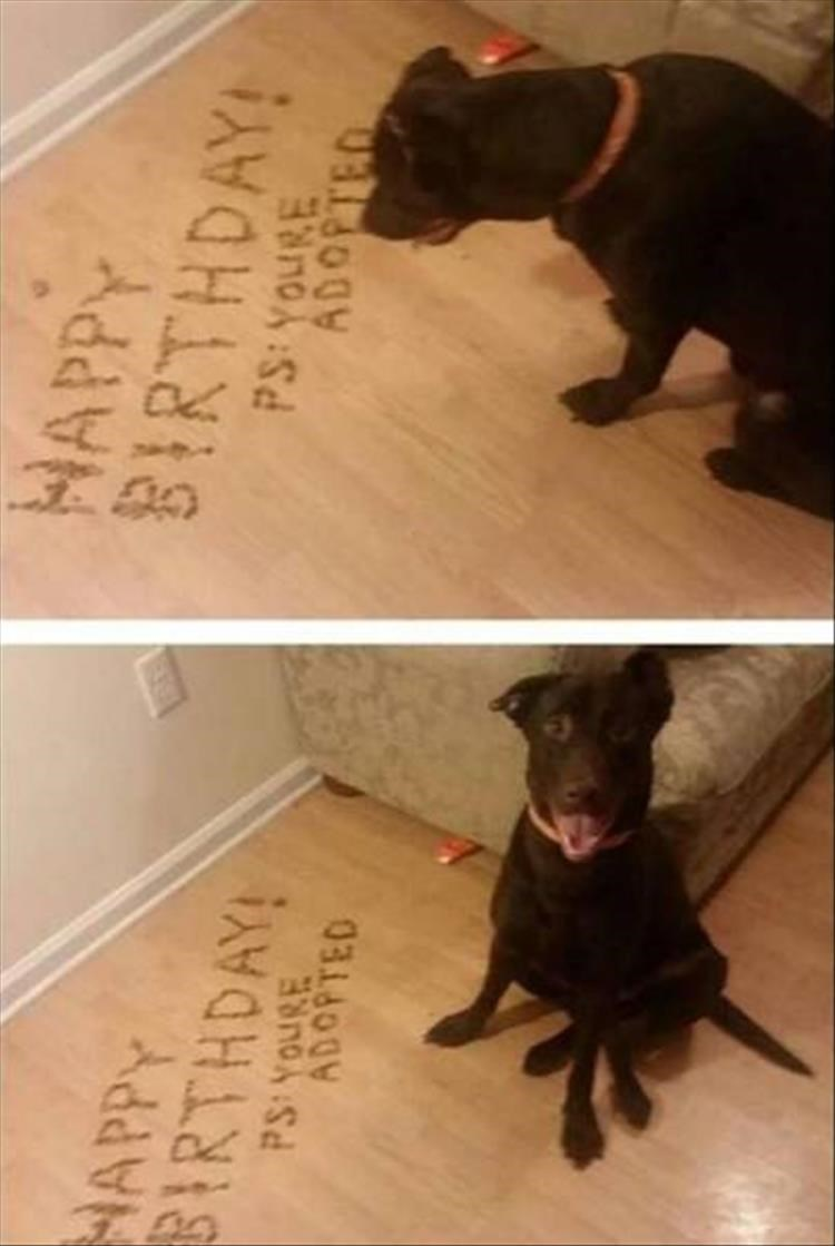Dog - HAPPY BIRTHDAY! HAPPY BIRTHDAY! ADOPTED ADOPTED