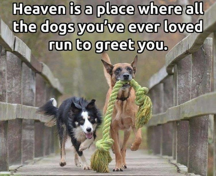 Dog breed - Heaven is a place where all the dogs you've ever loved run to greet you.