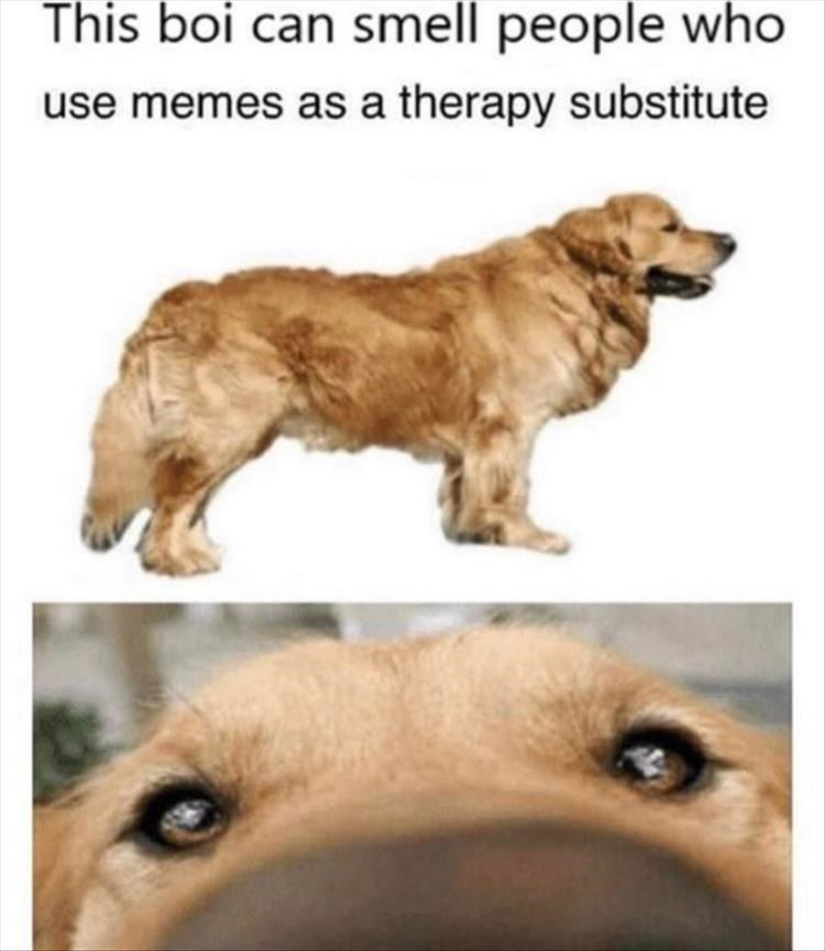 Dog - This boi can smell people who use memes as a therapy substitute