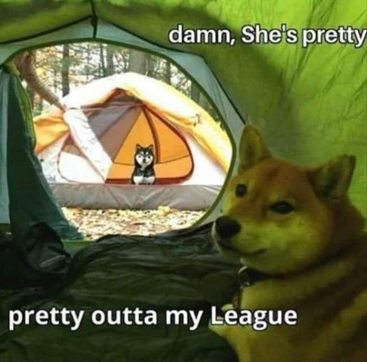 Mammal - damn, She's pretty pretty outta my League
