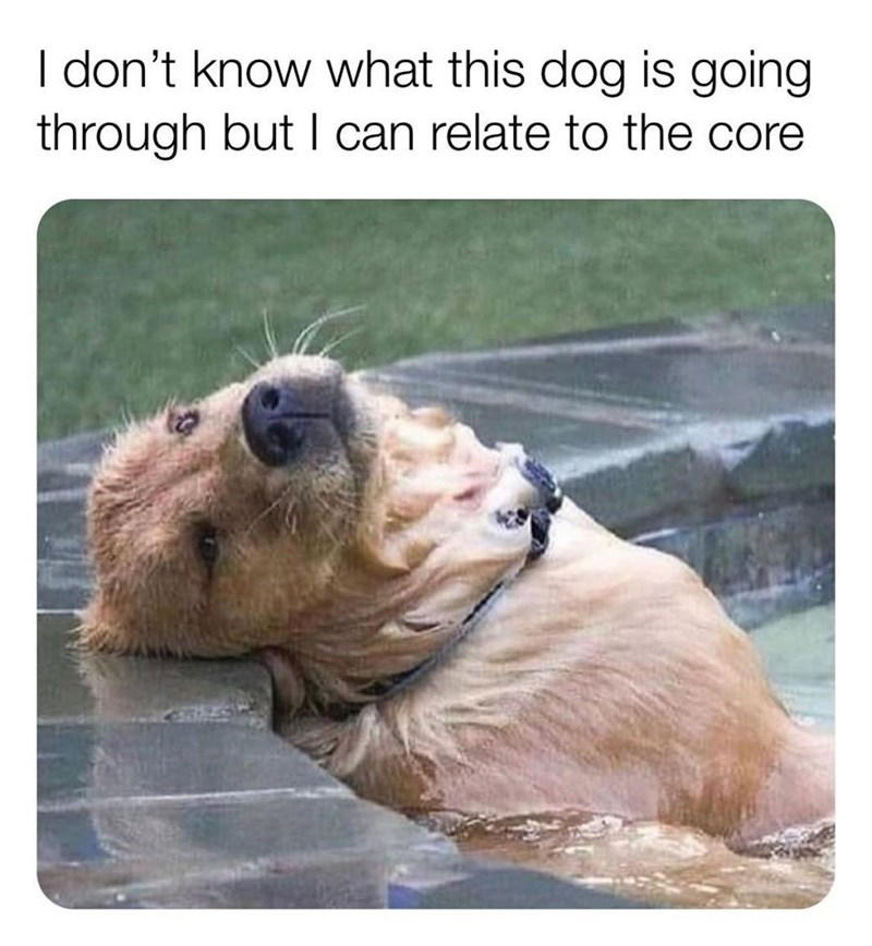 Mammal - I don't know what this dog is going through but I can relate to the core