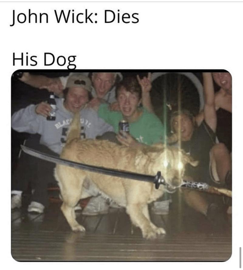 Canidae - John Wick: Dies His Dog BLAC