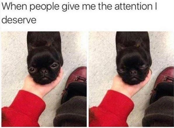 Canidae - When people give me the attention I deserve