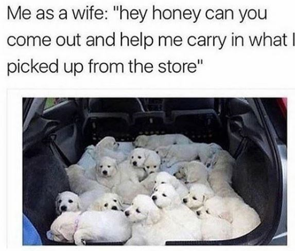 Dog breed - Me as a wife: