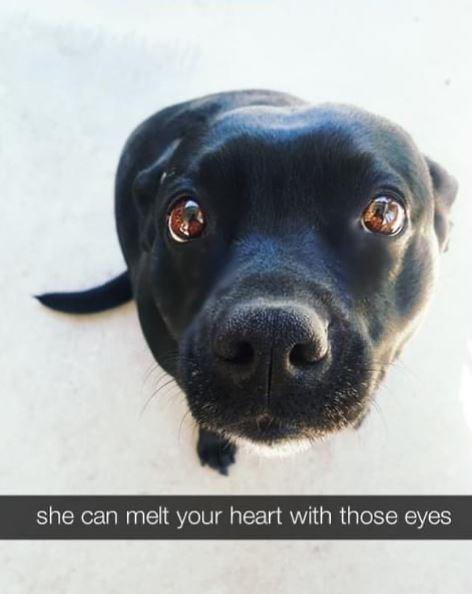 Dog breed - she can melt your heart with those eyes