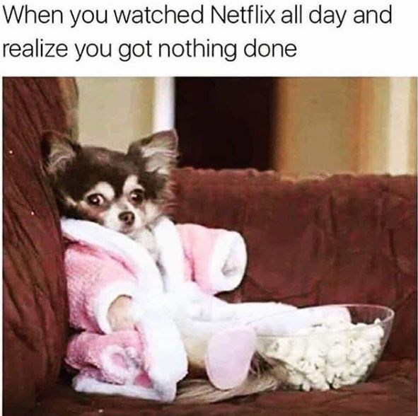 Canidae - When you watched Netflix all day and realize you got nothing done