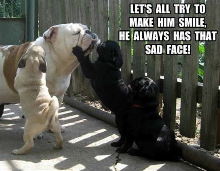 Dog - LET'S ALL TRY TO MAKE HIM SMILE, HE ALWAYS HAS THAT SAD FACE!