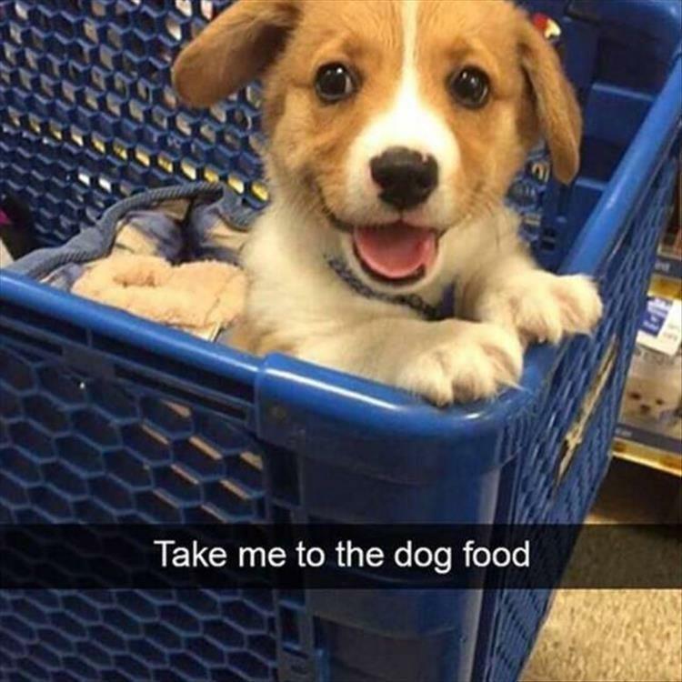 Dog - Take me to the dog food