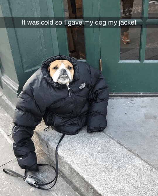 Snout - It was cold so I gave my dog my jacket