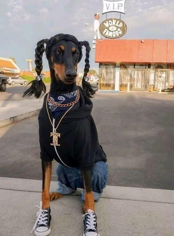 Dog - V.I.P NORLD FINOUS