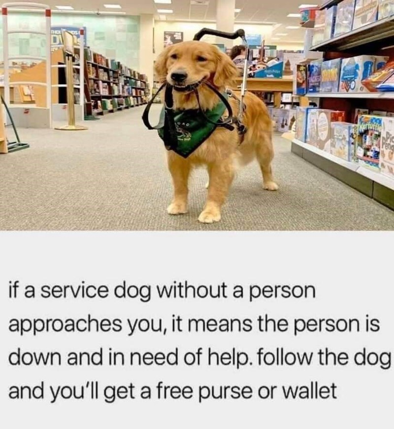 Dog - THO Karfuffie if a service dog without a person approaches you, it means the person is down and in need of help. follow the dog and you'll get a free purse or wallet
