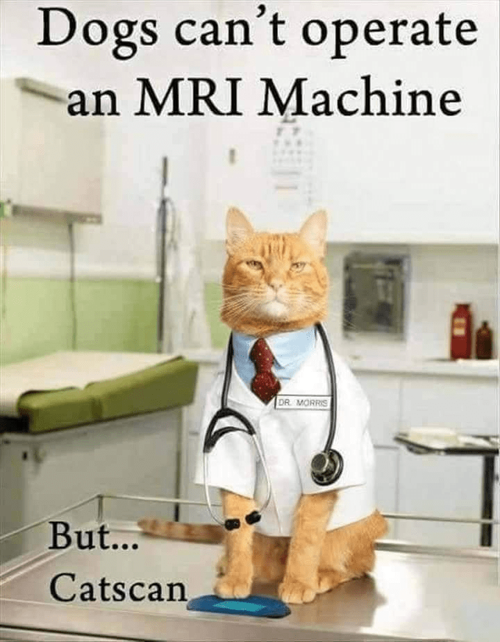 Cat - Dogs can't operate an MRI Machine DR. MORRIS But... Catscan