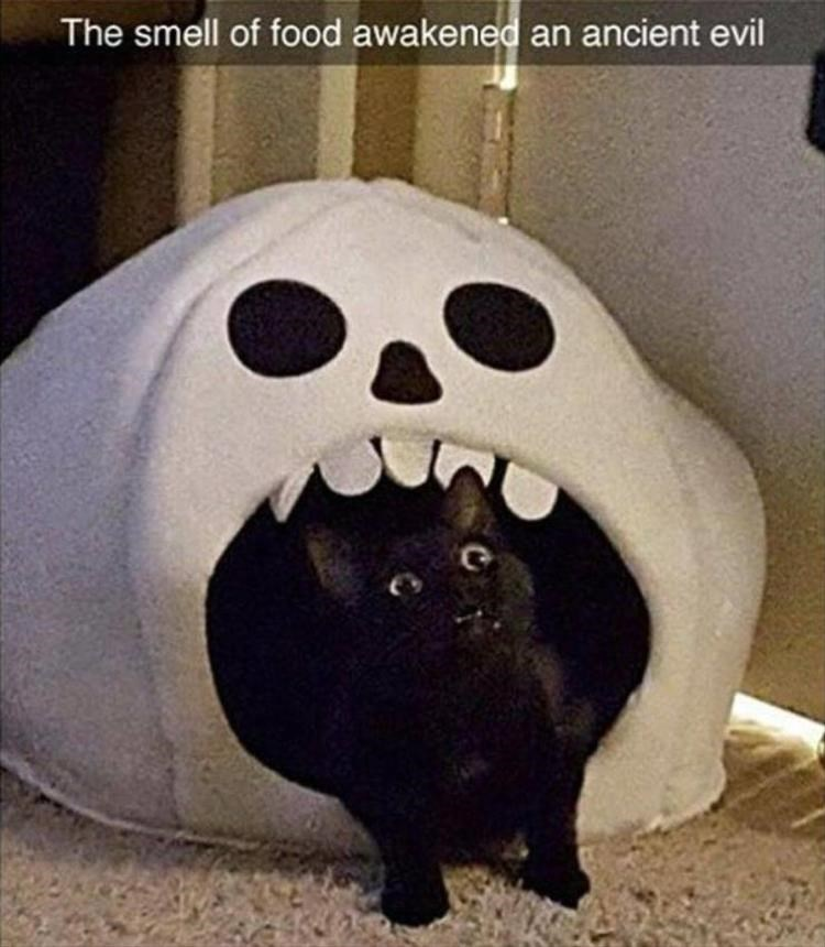 The smell of food awaken an ancient evil black cat exiting a ghost face shaped cat bed