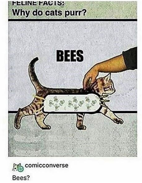 FELINE FACT Why do cats purr? BEES comicconverse Bees? illustration of a cat full of bees