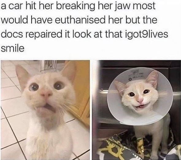 a car hit her breaking her jaw most would have euthanised her but the docs repaired it look at that igot91ives smile cute white cat with a crooked smile