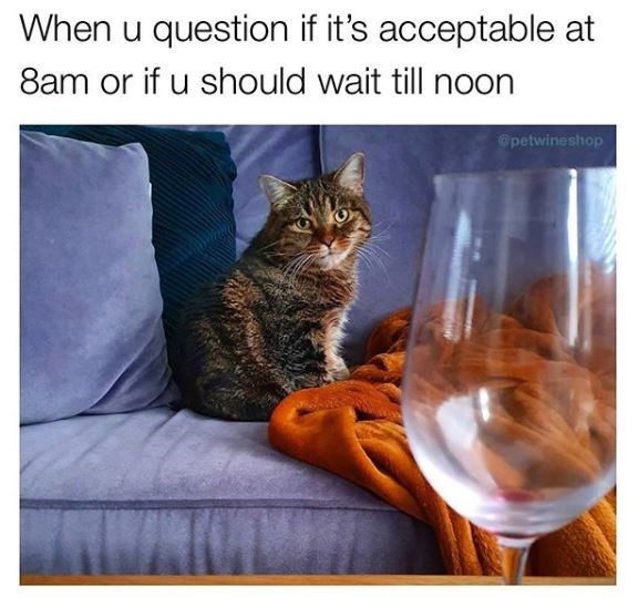 Cat - When u question if it's acceptable at 8am or if u should wait till noon @petwineshop