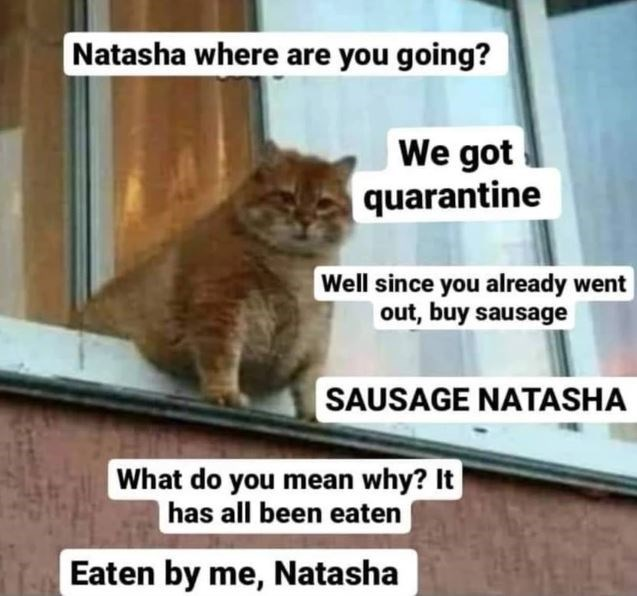 Cat - Natasha where are you going? We got quarantine Well since you already went |out, buy sausage SAUSAGE NATASHA What do you mean why? It has all been eaten Eaten by me, Natasha