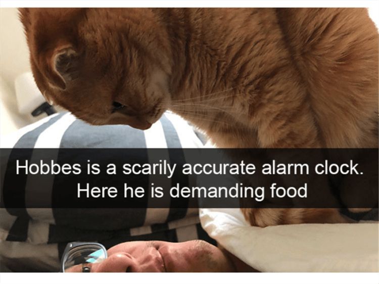 Text - Hobbes is a scarily accurate alarm clock. Here he is demanding food