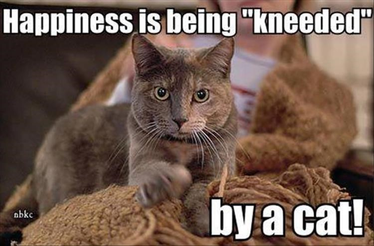 "Cat - Happiness is being ""kneeded"" by a cat! obkc"