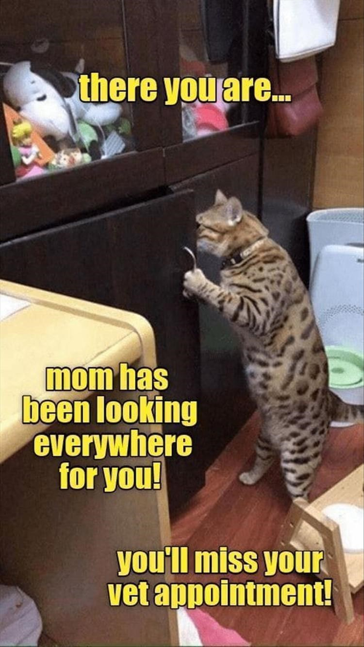 Cat - there you are. mom has been looking everywhere for you! you'll miss your vet appointment!