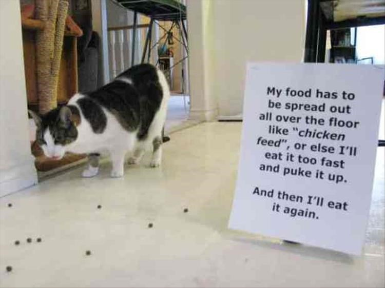 "Cat - My food has to be spread out all over the floor like ""chicken feed"", or else I'll eat it too fast and puke it up. And then I'Il eat it again."