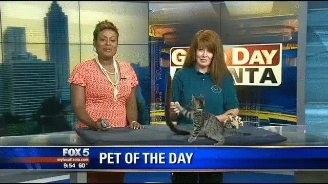 Cat - DAY VTA FOX 5 PET OF THE DAY yfoxatlanta.com 9:54 60
