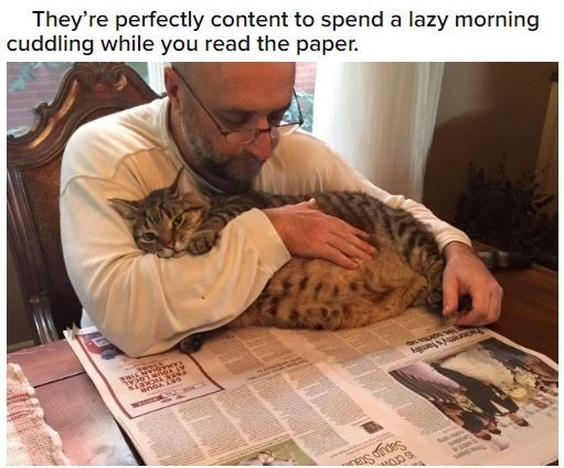 Cat - They're perfectly content to spend a lazy morning cuddling while you read the paper. Sapgo Sta