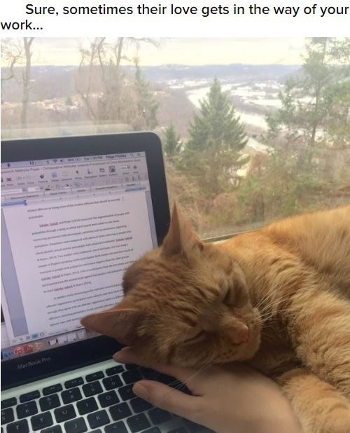Cat - Sure, sometimes their love gets in the way of your work... SMCO Machook Pr K