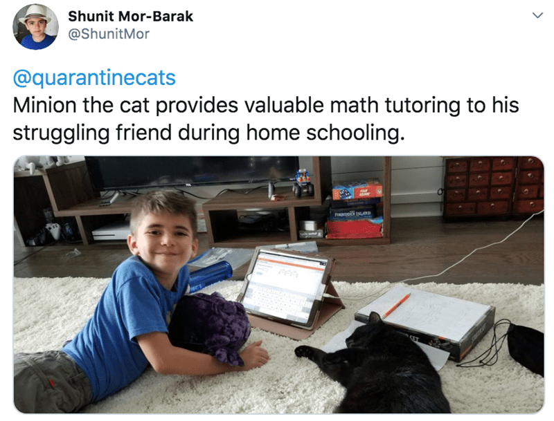 Learning - Shunit Mor-Barak @ShunitMor @quarantinecats Minion the cat provides valuable math tutoring to his struggling friend during home schooling. FORNDDEN ISLAND