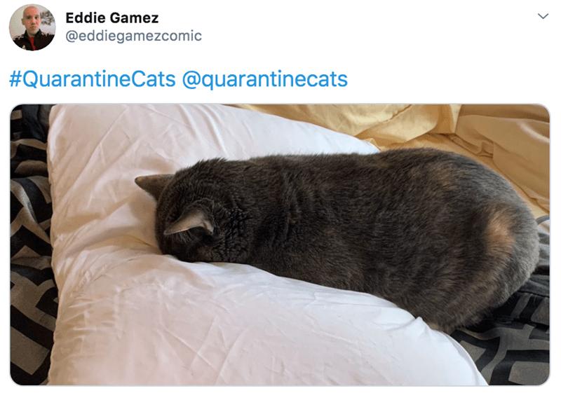 Cat - Eddie Gamez @eddiegamezcomic #QuarantineCats @quarantinecats
