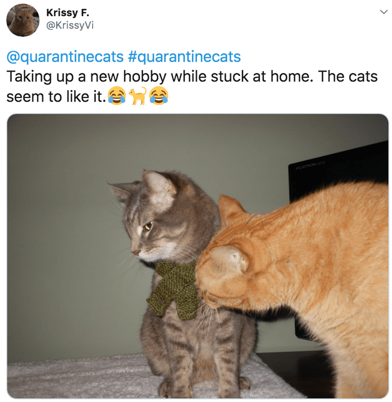 Cat - LOVE Krissy F. @KrissyVi @quarantinecats #quarantinecats Taking up a new hobby while stuck at home. The cats seem to like it. e FLATDON
